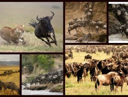Serengeti Day Trip from Mwanza